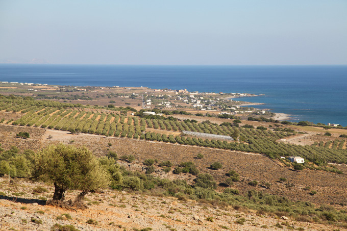 southern Cretan olives and Mediterranean